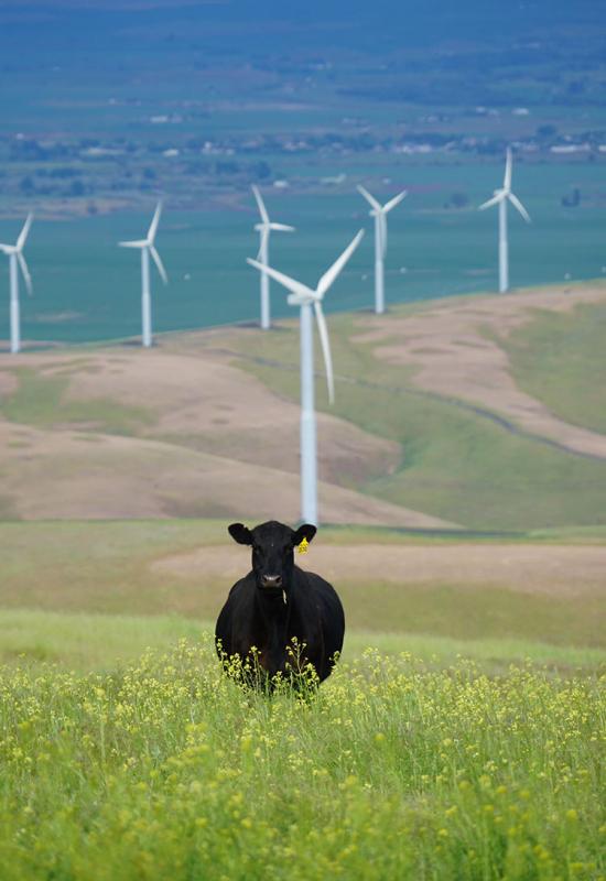 waverley-wind-farm-project-image